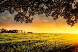 Nieuw onderzoek naar verwaarding van mest uit nieuwe stalsystemen