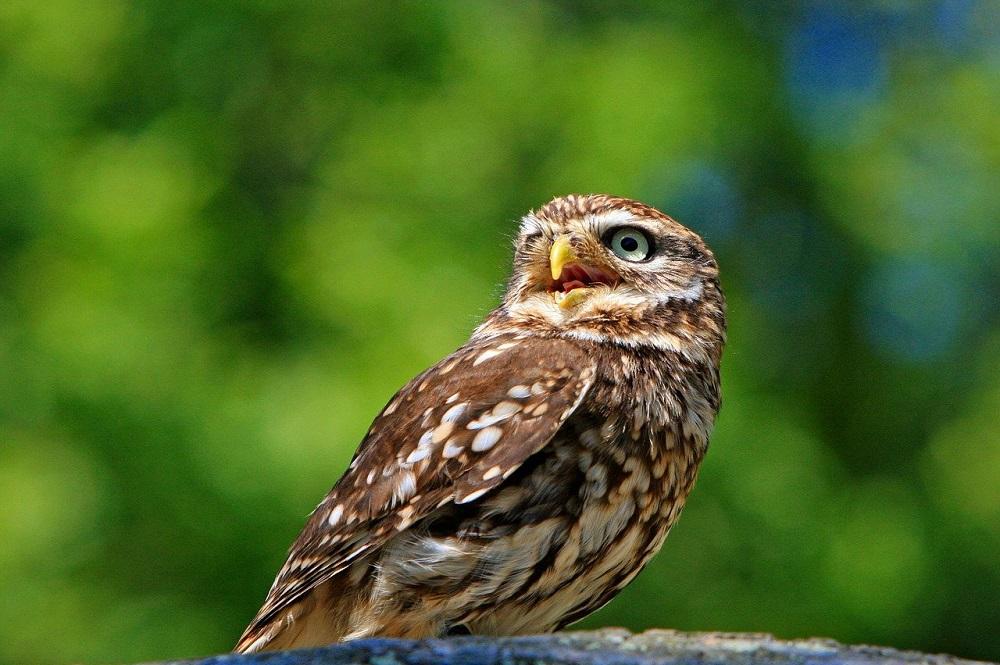 Broedvogels doen het in Nederland beter dan in Europa
