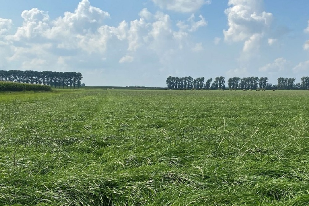 Wat zijn de optimale omstandigheden voor onkruidbestrijding in grasland in het najaar?